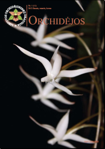 Orchidejos Nr.11