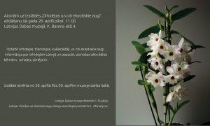 Orchidėjų paroda Rygoje