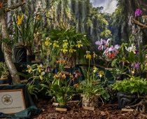 Tarptautinė orchidėjų paroda Sopote